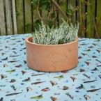 At Home in the Country - Dawn Chorus Birds Oil Cloth Fabric by the Metre
